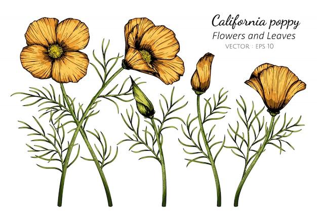 Illustration de dessin de fleur et feuille de pavot de californie orange