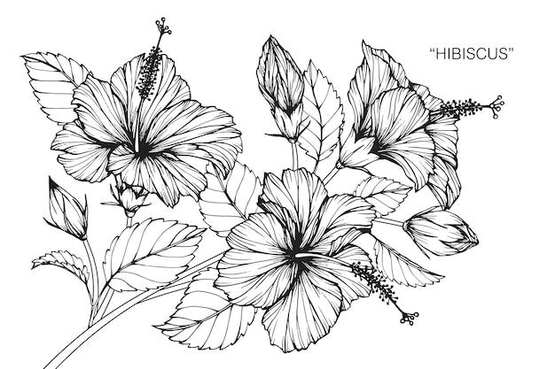 Illustration de dessin de fleur d'hibiscus