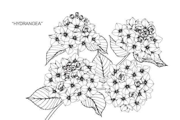 Illustration de dessin de fleur d'hortensia