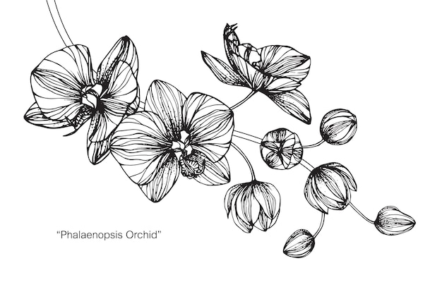 Illustration de dessin de fleur d'orchidée