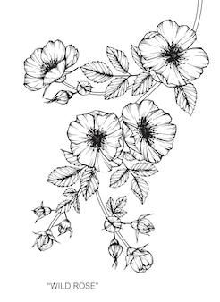 Illustration de dessin de fleur rose.