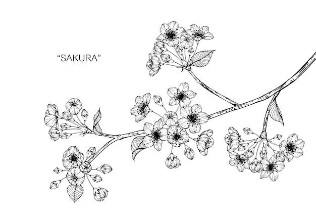 Illustration de dessin fleur sakura.