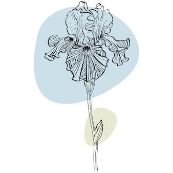 Illustration de dessin main iris.