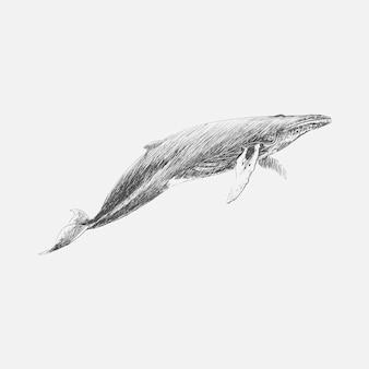Illustration dessin stye de baleine à bosse