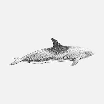 Illustration dessin stye de baleine à tête de melon