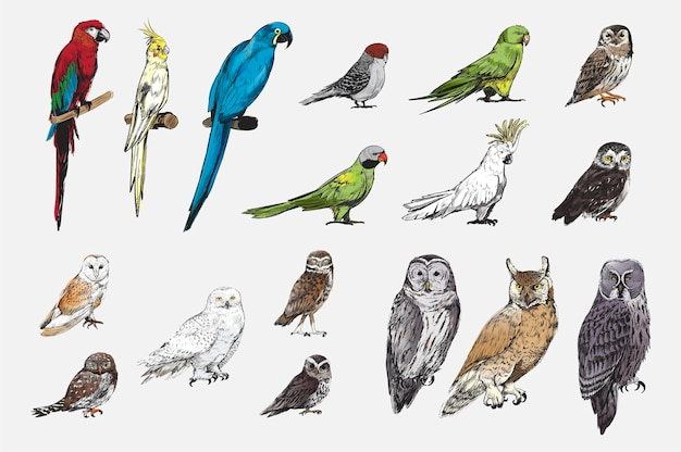 Illustration dessin style de collection d'oiseaux perroquet