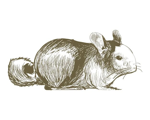 Illustration dessin style de rat