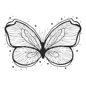 Illustration dessinée de beauté papillon à la main.