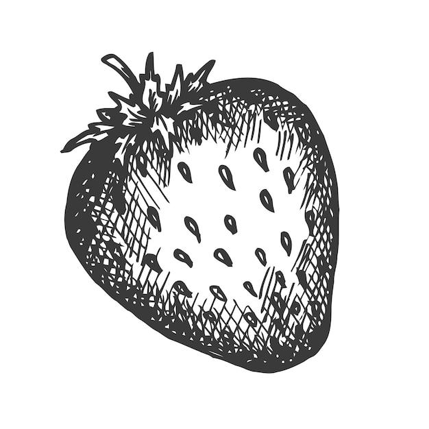 Illustration dessinée à la main aux fraises.