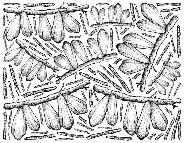 Illustration dessinée à la main de bilimbi fruits