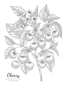 Illustration dessinée à la main botanique de fruits de cerise.