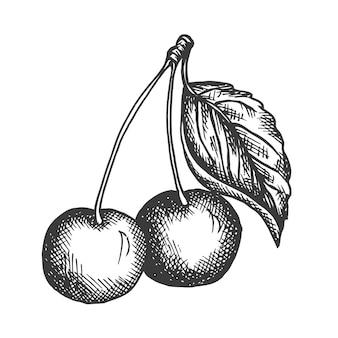 Illustration dessinée à la main de cerise.
