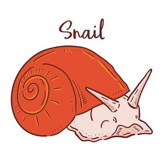 Illustration dessinée à la main de l'escargot.
