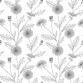 Illustration dessinée à la main florale de pissenlit de modèle sans couture avec le dessin au trait sur fond blanc.