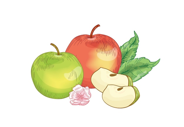 Illustration dessinée à la main de fruits de pomme