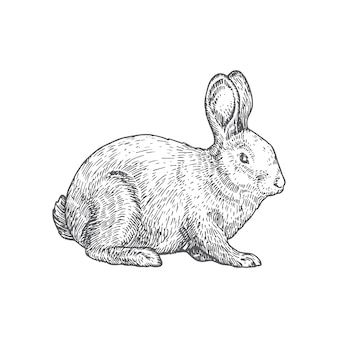 Illustration dessinée à la main de lapin.