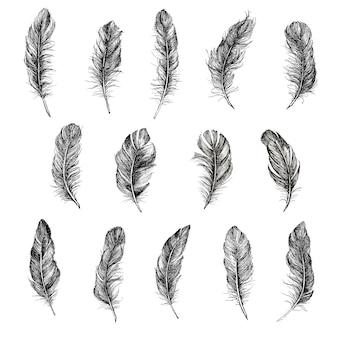 Illustration dessinée à la main de motif de plumes