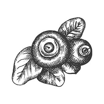 Illustration dessinée à la main de myrtille.