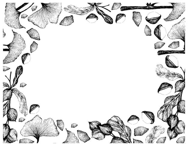 Illustration dessinée à la main de noix et de haricots