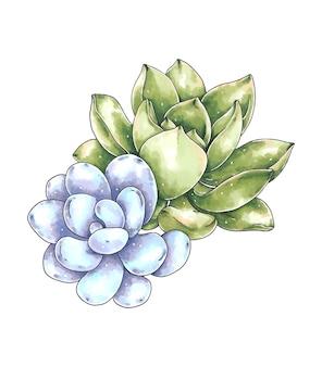Illustration dessinée à la main avec des plantes succulentes