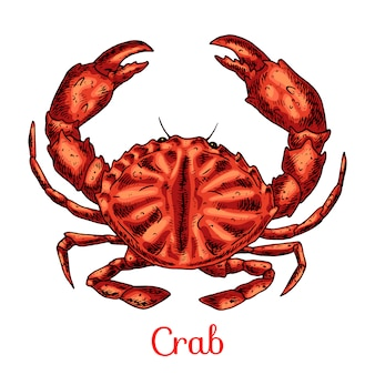 Illustration de dessinés à la main de crabe