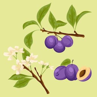 Illustration détaillée de fruits et de fleurs de prune