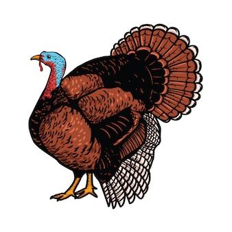 Illustration de la dinde sur fond blanc. thème de thanksgiving. élément pour affiche, emblème, signe, carte,. illustration