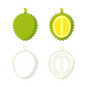 Illustration du durian, un fruit typique de l'asie du sud-est