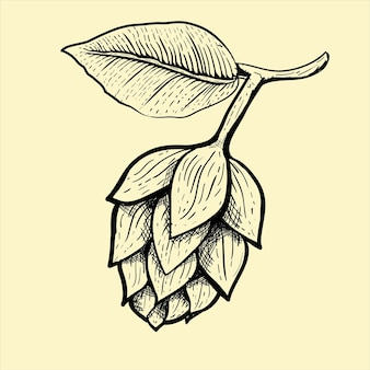 Illustration du fruit de la bière