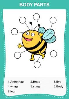 Illustration du vocabulaire de l'abeille faisant partie du corps, écrivez le nombre correct de parties du corps.vector