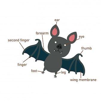 Illustration du vocabulaire chauve-souris du corps