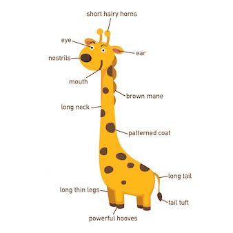 Illustration du vocabulaire girafe faisant partie de body.vector