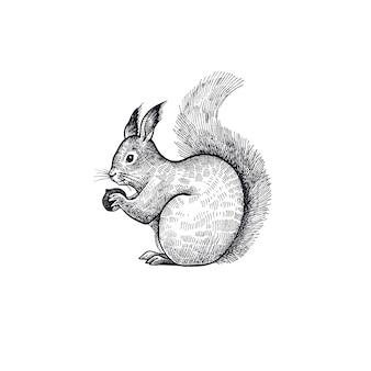 Illustration d'écureuil forestier de l'animal.