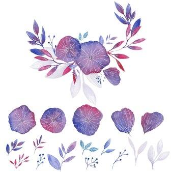 Illustration d'éléments aquarelle fleurs de virginie