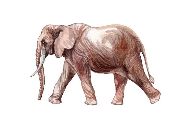 Illustration d'éléphant aquarelle peinte à la main