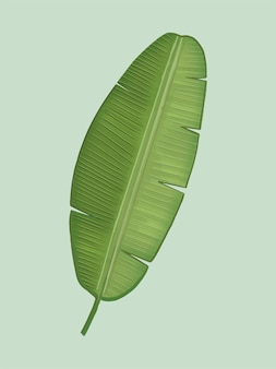 Illustration de feuille de bananier vert tropical