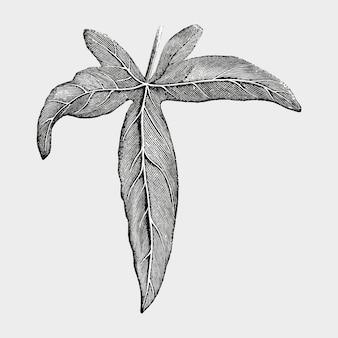 Illustration de la feuille vintage