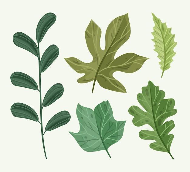 Illustration de feuilles dessinées à la main