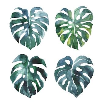 Illustration de feuilles de monstera aquarelle