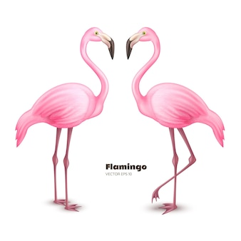 Illustration de flamant rose réaliste