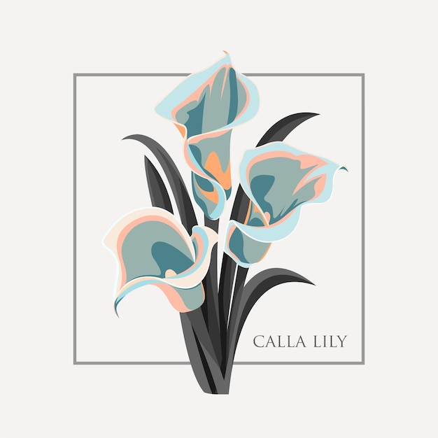 Illustration de fleur de lys calla