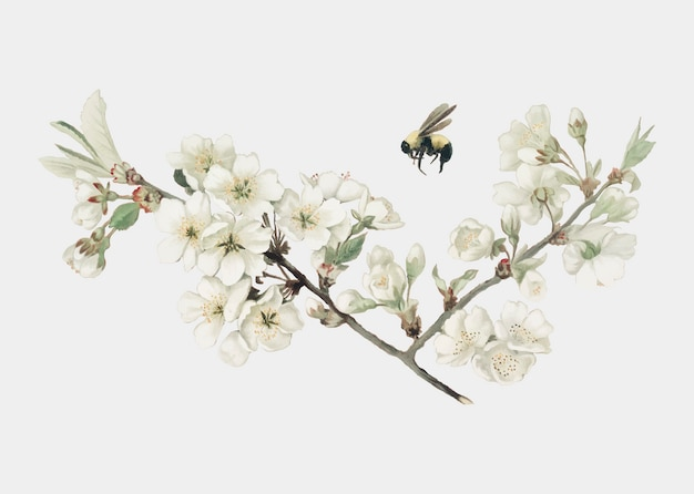 Illustration de fleur de pommier sur une carte de noël