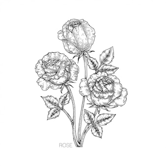 Illustration de fleur rose