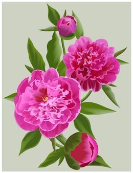 Illustration de fleur de vecteur de pivoines roses réalistes