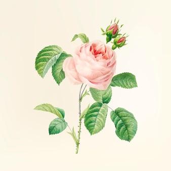 Illustration de fleur vintage