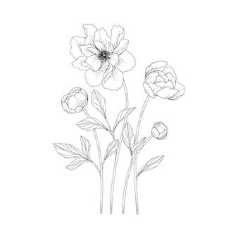 Illustration florale de pivoine dessinée à la main avec dessin au trait sur fond blanc.