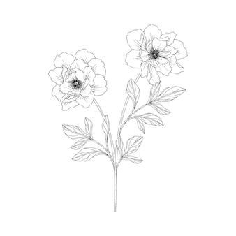 Illustration florale de pivoine dessinée à la main avec dessin au trait