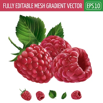 Illustration de framboises sur blanc