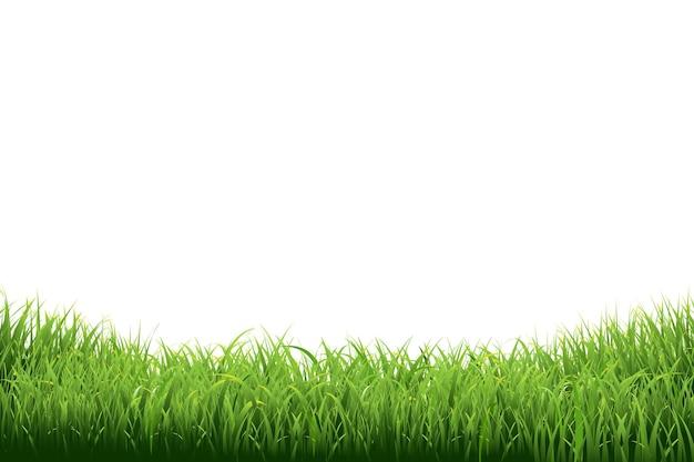 Illustration de la frontière de l'herbe verte