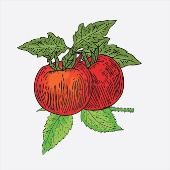 Illustration de fruits sur fond blanc